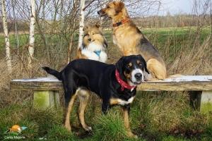 Joris, Iola und Aisha