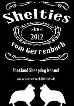 Shelties vom Gerrenbach